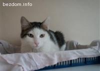 Котенцето Роналдо си търси дом