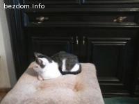 Котенцето Рони търси топъл дом
