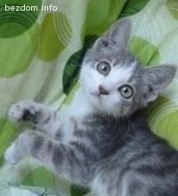 Котето Мечта намери своя нов дом