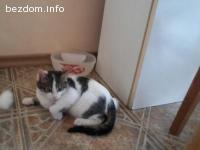 Котето Сънчо търси своите хора!