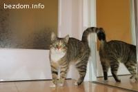 Красавицата Лина търси дом-oсиновена:)