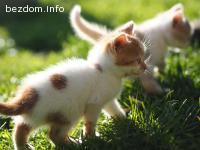 Красиви котенца