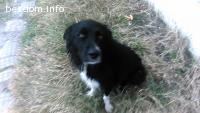 Куче търси грижовни стопани