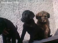 Кученца имат нужда от дом