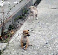 Кученца нуждаещи се от дом