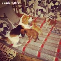 Кученца си търсят дом