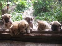 кученца трсят нов дом