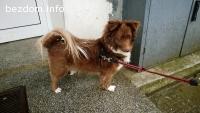 Кучето Рижка