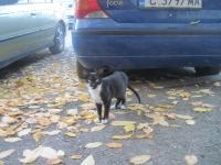 Малка черна котана търси дом