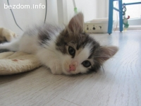 Малка котешка прелест търси постоянен дом-осиновен:)