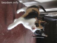 Малка красавица търси дом-осиновена:)