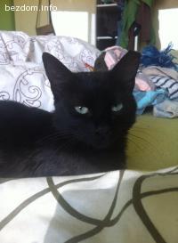 Малката  черна  Бижу търси дом-осиновена
