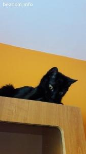 Малката прелест Атина търси дом отново-осиновена!
