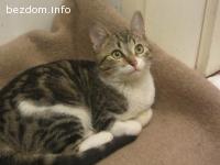 Малката тигрова красавица Моли търси дом-осиновена:)