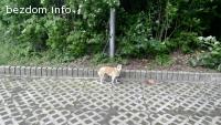 Малко кученце - търси дом