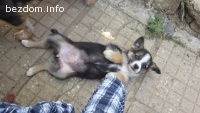 Малко кученце ОСИНОВЕНО