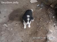 малко женско кученце