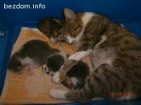 Мама Лили и бебетата