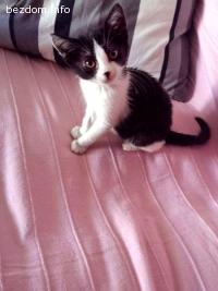 ОСИНОВЕНА - Мъркащо красиво и гушливо малко коте Калипсо!