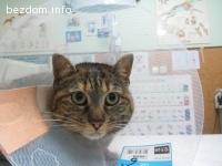 Маца търси дом-осиновена:)