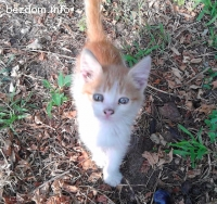 Мъжко котенце търси дом -Осиновено