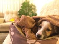 Muddy - кучето, което не се отказа