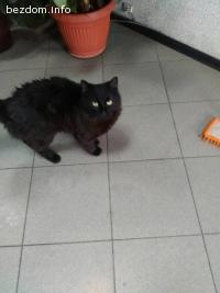 Намерена черна котка