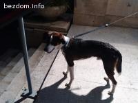 Намерено куче в БАН