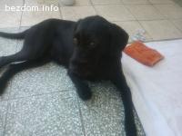 Намерено женско куче