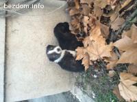 Намерих тези кученца- нека им намерим дом