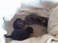 Новородени котенца търсят дом