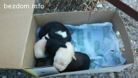 Новородени кученца
