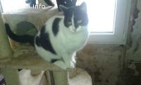 Олеа-черно-бяла хубавица, търсеща своя дом!