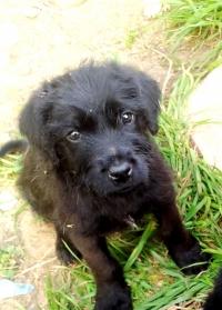 ОСИНОВЕНИ! Подарявам 3-месечни кученца