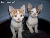 Осиротели котенца (майката блъсната от кола)