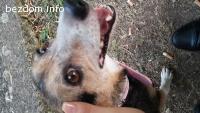 откраднато женско куче