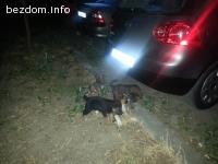 Пет кученца на 1 месец