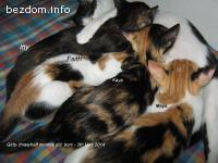 Пет разкошни домашни котенца търсят своите добри хора