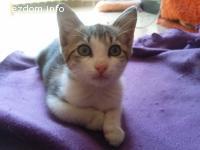 Пинко търси стопани за осиновяване:)