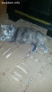 Има си дом! Подарява се ангорска женска котка!
