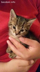 Подарява се малко мъжко котенце!