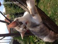 Подарява се женско котенце