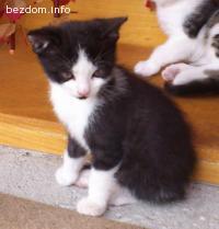 ПОДАРЯВАМ 1 прекрасно котенце