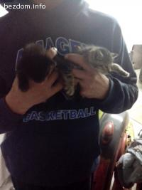 подарявам 2 котета спешно!