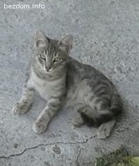 Подарявам 4 котета