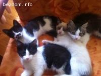 Подарявам четири котета