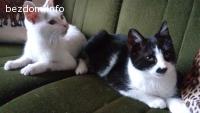Подарявам две мъжки котета .