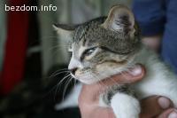 Подарявам две сладки котета