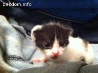 Подарявам Коте на 1 месец СПЕШНО!!!