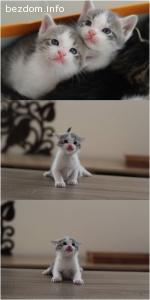 Подарявам котенца на 1 месец